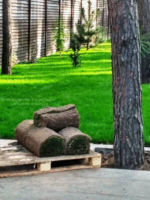 Создание газона. Наши работы