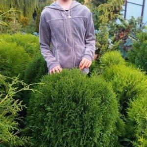 Туя западная Литл Джайант (Thuja occidentalis Little Giant) ФОТО Питомник растений Природа Priroda (40)