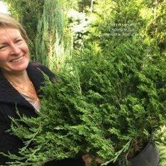 Можжевельник казацкий Рокери Джем (Juniperus sabina Rockery Gem) ФОТО Питомник растений Природа Priro (227)da