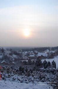 Питомник растений Природа зимой ФОТО (1)