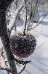Питомник растений Природа зимой ФОТО (12)