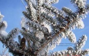 Питомник растений Природа зимой ФОТО (13)