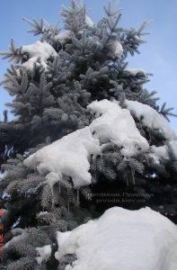 Питомник растений Природа зимой ФОТО (15)
