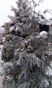 Питомник растений Природа зимой ФОТО (17)