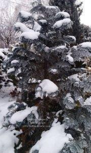 Питомник растений Природа зимой ФОТО (19)
