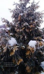Питомник растений Природа зимой ФОТО (20)