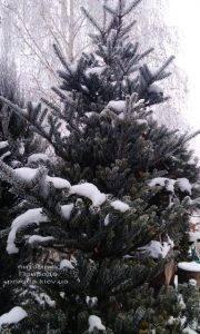 Питомник растений Природа зимой ФОТО (24)