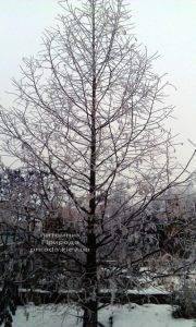 Питомник растений Природа зимой ФОТО (25)