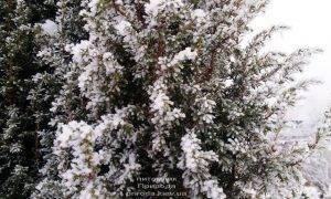 Питомник растений Природа зимой ФОТО (29)