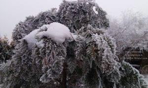 Питомник растений Природа зимой ФОТО (30)