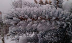 Питомник растений Природа зимой ФОТО (36)