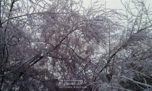 Питомник растений Природа зимой ФОТО (37)