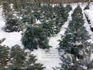 Питомник растений Природа зимой ФОТО (38)