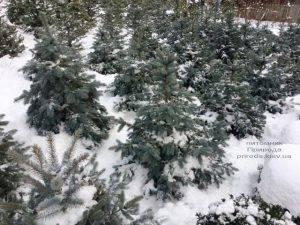 Питомник растений Природа зимой ФОТО (39)