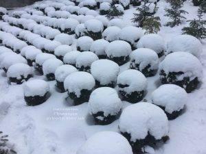 Питомник растений Природа зимой ФОТО (41)