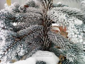 Питомник растений Природа зимой ФОТО (42)