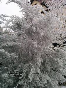 Питомник растений Природа зимой ФОТО (51)