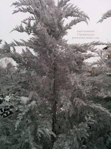 Питомник растений Природа зимой ФОТО (52)