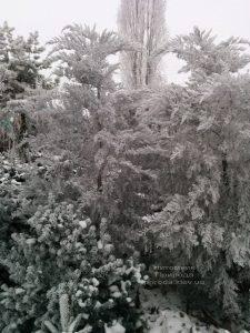 Питомник растений Природа зимой ФОТО (53)