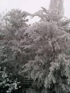 Питомник растений Природа зимой ФОТО (54)