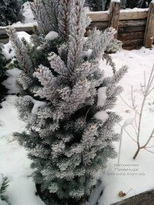 Питомник растений Природа зимой ФОТО (63)