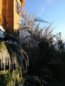Питомник растений Природа зимой ФОТО (66)