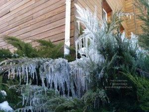 Питомник растений Природа зимой ФОТО (67)