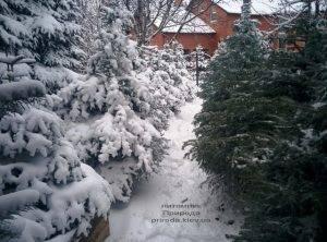 Питомник растений Природа зимой ФОТО (68)