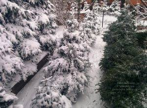 Питомник растений Природа зимой ФОТО (69)