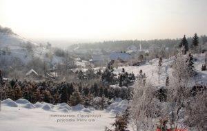 Питомник растений Природа зимой ФОТО (7)