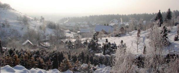 Питомник растений Природа зимой ФОТО