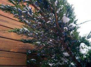 Питомник растений Природа зимой ФОТО (71)