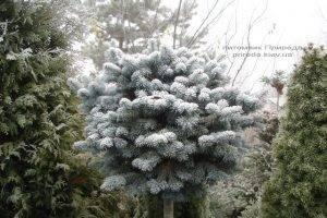 Питомник растений Природа зимой ФОТО (72)