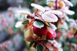 Питомник растений Природа зимой ФОТО (77)