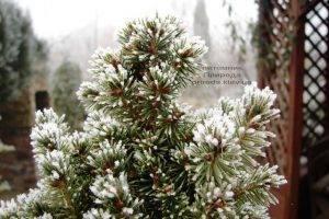 Питомник растений Природа зимой ФОТО (78)