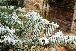 Питомник растений Природа зимой ФОТО (79)