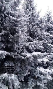 Питомник растений Природа зимой ФОТО (84)