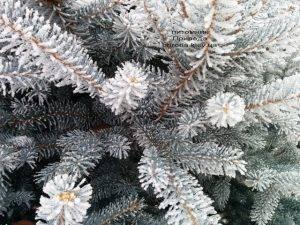 Питомник растений Природа зимой ФОТО (88)