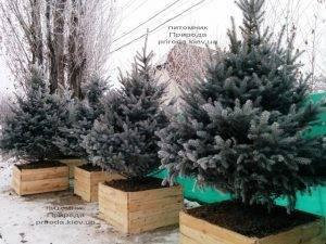Питомник растений Природа зимой ФОТО (89)