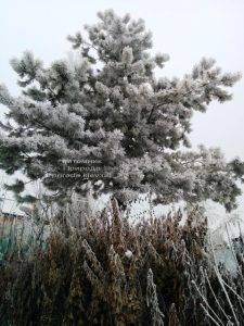 Питомник растений Природа зимой ФОТО (91)
