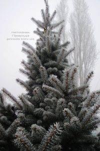 Питомник растений Природа зимой ФОТО (93)