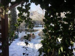 Плющ садовый вечнозелёный обыкновенный зимой на улице ФОТО Питомник растений Природа (Priroda) (54)