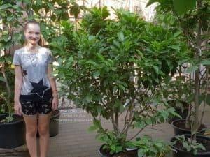 Магнолия Сюзан (Magnolia Susan) ФОТО Питомник растений Природа (Priroda) (2)