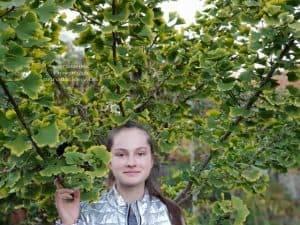 Гинкго двулопастное (Ginkgo biloba) ФОТО Питомник растений Природа (6)