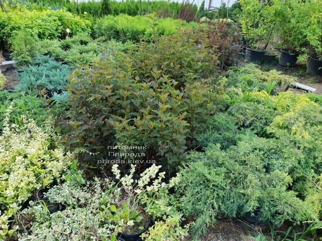 Питомник растений Природа (31)