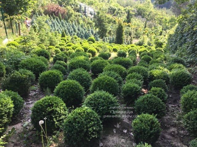 Питомник растений Природа